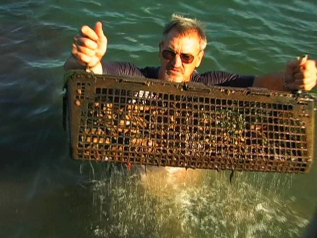 Widows-Hole-Oyster-Farm-Bringing-Oysters-Back-to-New-York-Waters