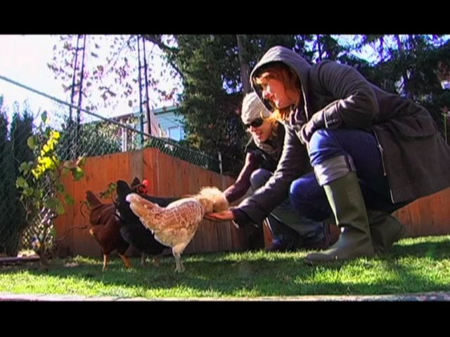 Brooklyns-Backyard-Chicken-Keepers-food-curated