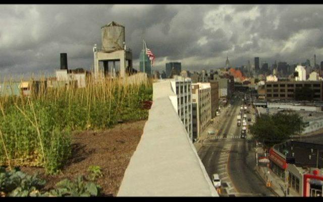The-Brooklyn-Grange-NYCs-Biggest-Rooftop-Farm