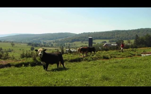 Spring-Lake-Farm-Inspiring-the-Grass-Fed-Movement-in-Upstate-New-York
