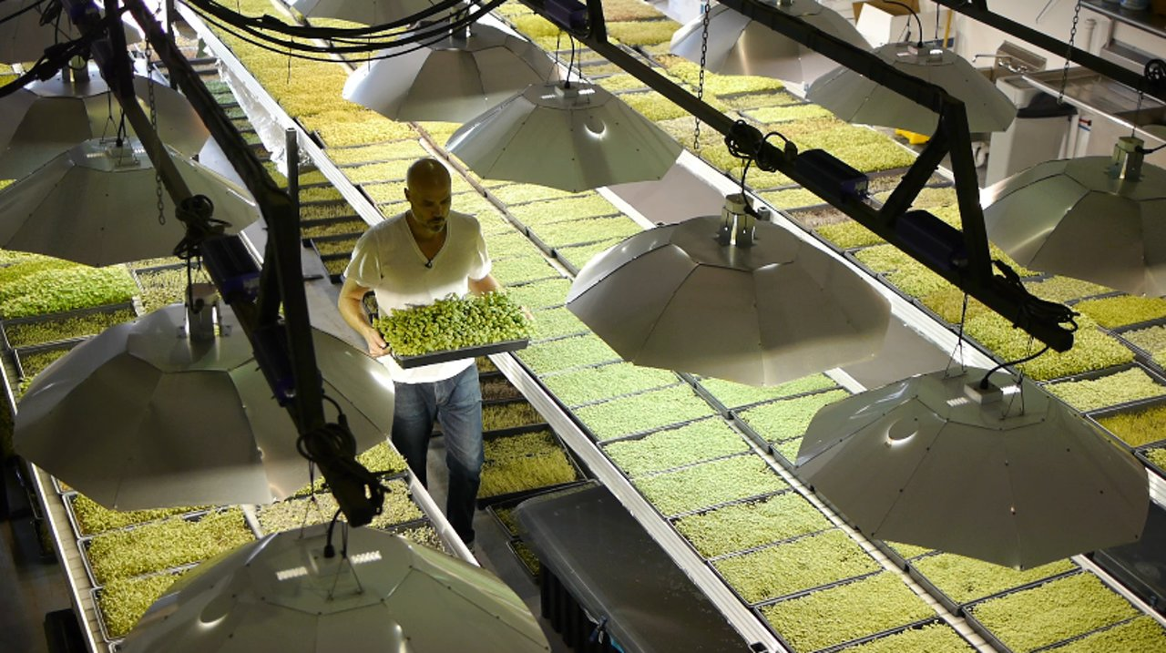Not Just For Decoration: Good Water Farms Microgreens
