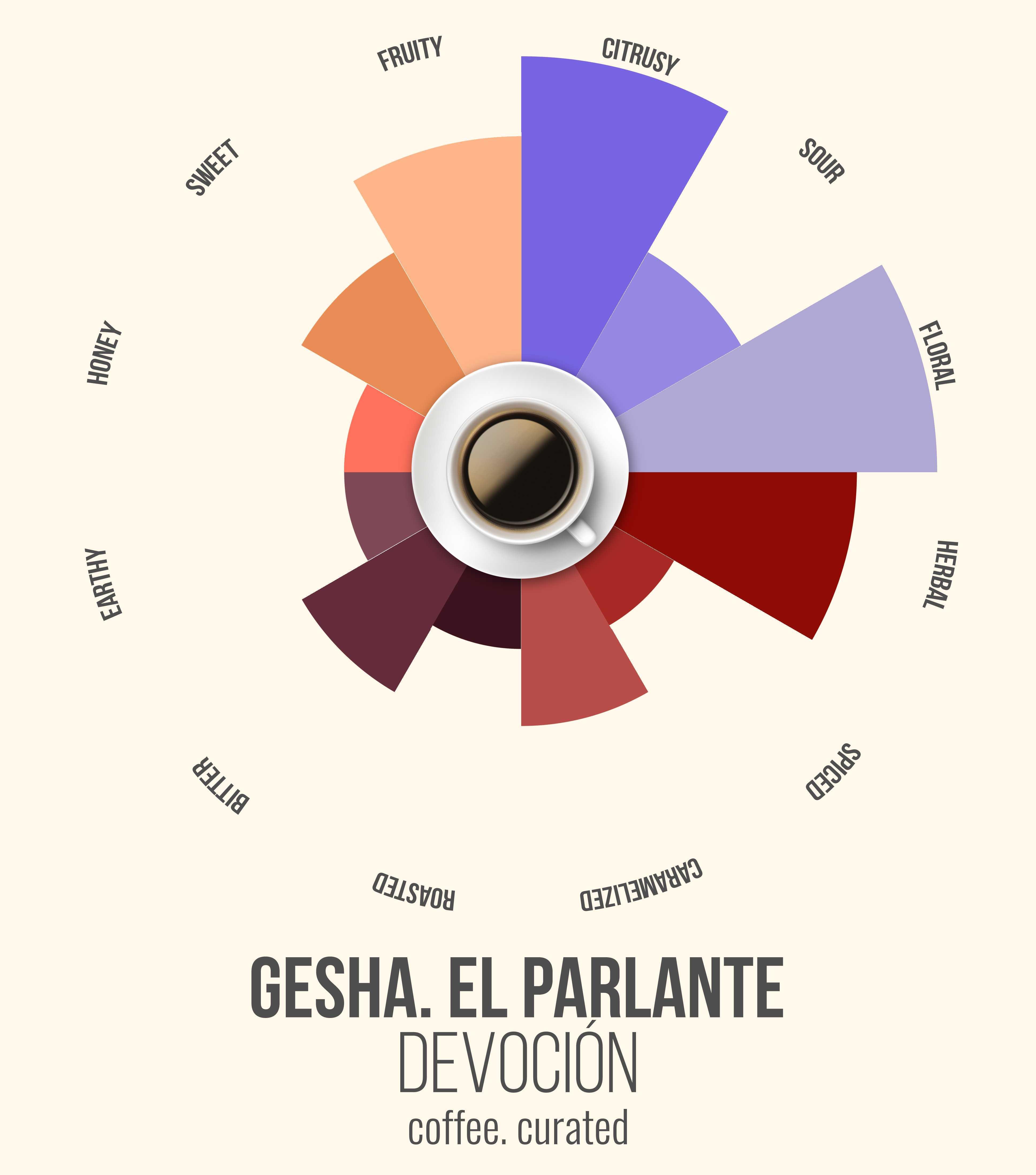 GESHA EL PARLANTE Devocion Coffee