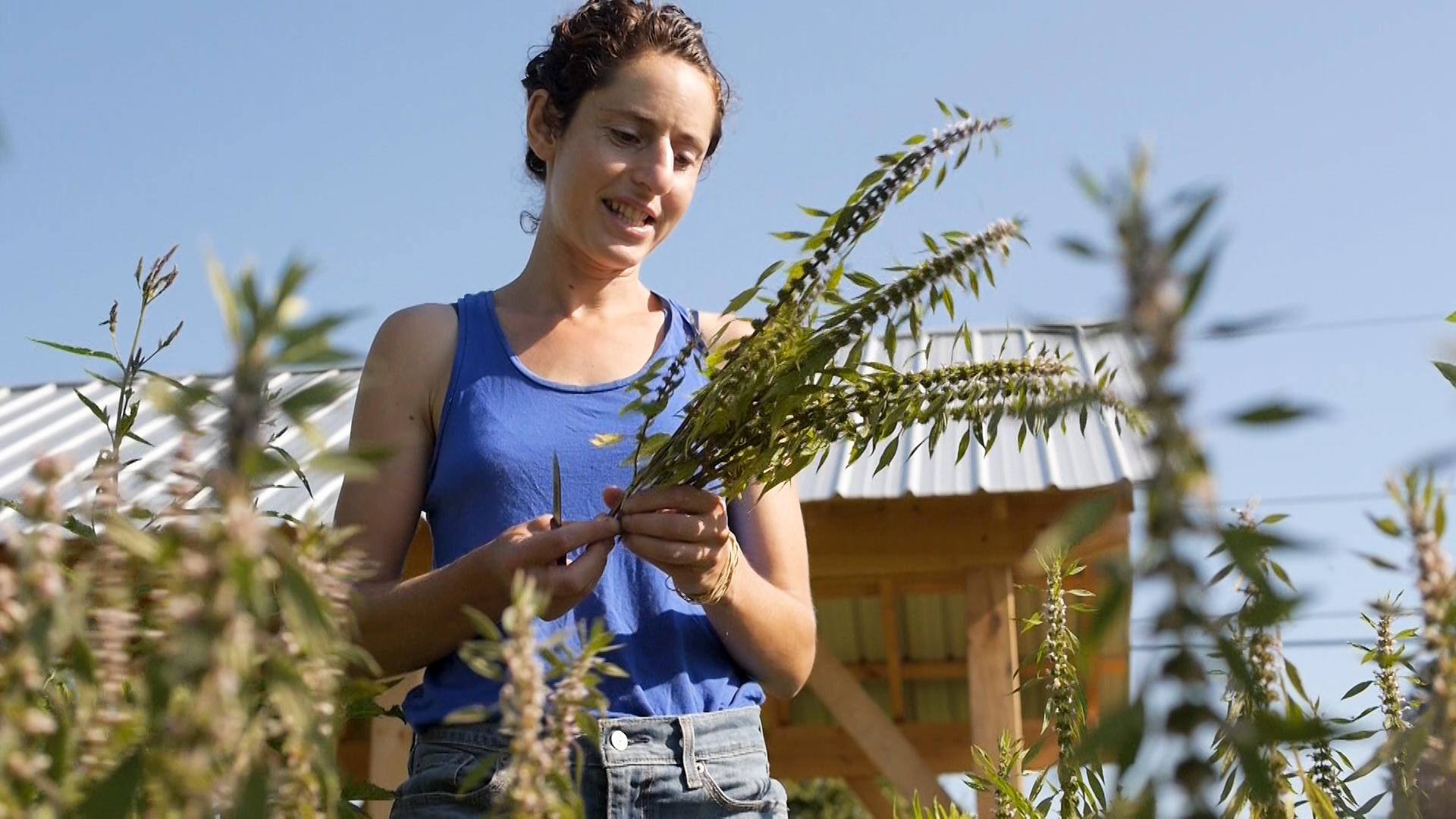 Herbal Medicine CSA, sawmill herb farm