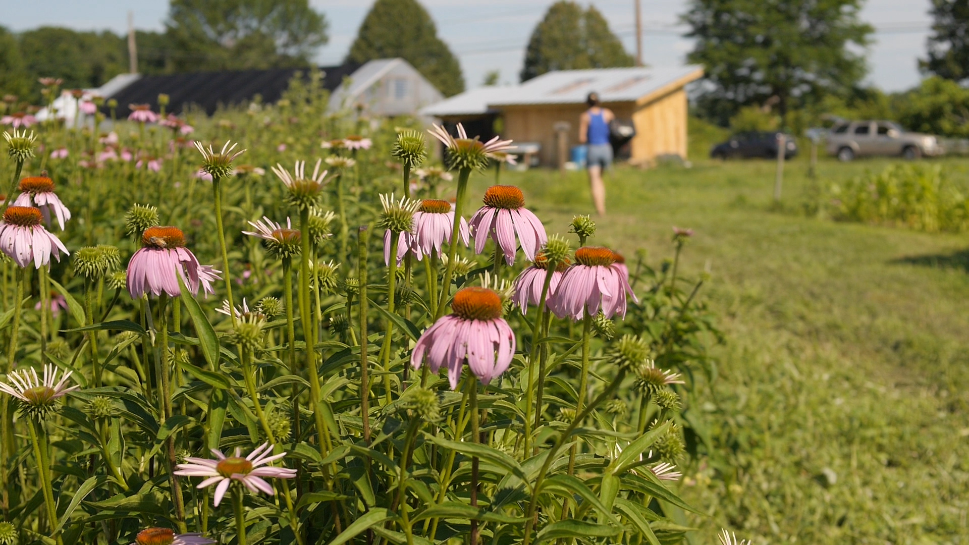 sawmill herb farm, food. curated.